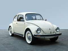 Beetle photo #17899
