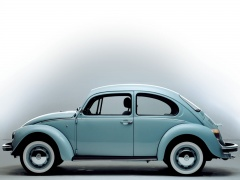 Beetle photo #17900