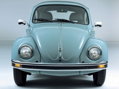 Beetle photo #17901