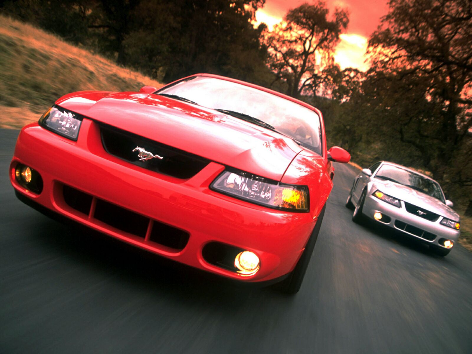 Ford Mustang Cobra photo 10611